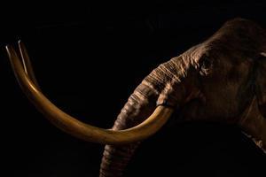 réplica mamute em um museu