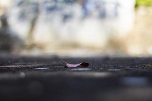 foco seletivo de folha caída no térreo