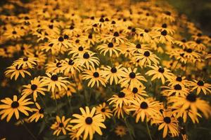 cama de flores amarelas