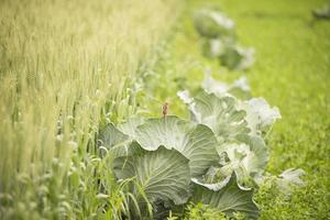 um pequeno pintinho empoleirado em uma fileira de plantações agrícolas