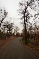 estrada pavimentada entre árvores