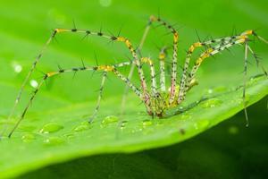 aranha em uma folha verde