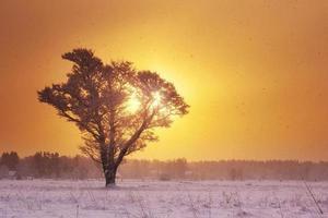 árvore solitária na neve no início da manhã
