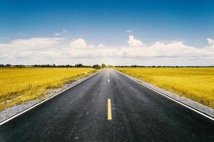 estrada em campo de arroz