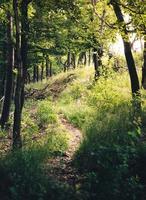 árvores em campo verde durante o dia foto