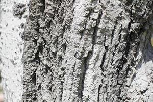 fundo de superfície texturizado foto