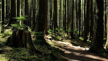 caminho da floresta na primavera foto