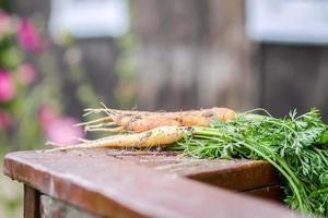 cenouras frescas lá fora foto