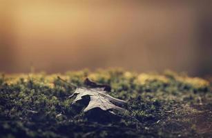 folha de outono caída foto