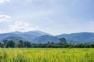 montanha e campo verde no campo foto