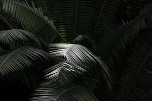 luz do sol atingindo folha de palmeira foto
