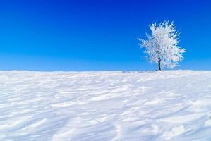 árvore nevado foto