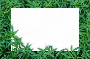maquete de cartão em folhas verdes