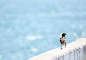pássaro andando em uma ponte ferroviária