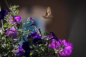 inseto voando em direção à flor roxa