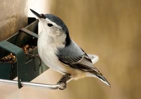 pássaro em um alimentador foto