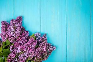 vista de cima de flores lilás