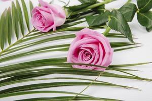vista lateral de rosas cor de rosa em uma folha de palmeira no fundo branco