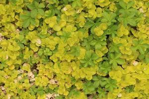 folhas verdes e amarelas
