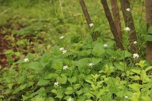 flores brancas na floresta