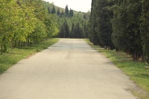 estrada através de árvores verdes foto