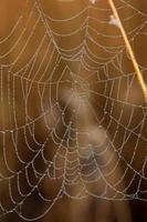 gotas de água na teia de aranha