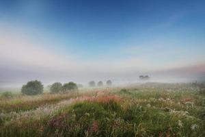 manhã de nevoeiro foto
