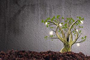 plantas verdes em fundo de cimento foto
