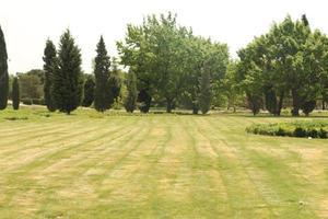 campo verde e árvores