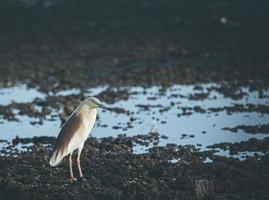 pássaro branco e marrom no chão