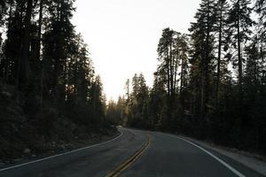 estrada de asfalto entre árvores