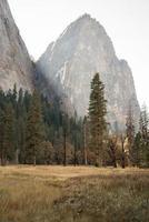 pinheiro perto da montanha foto