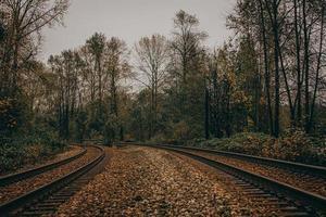 folhas de outono marrons na ferrovia durante o dia