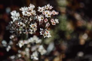 pequenas flores brancas em lente tilt shift