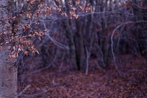folhas de outono na floresta