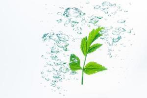 planta verde e bolhas na água
