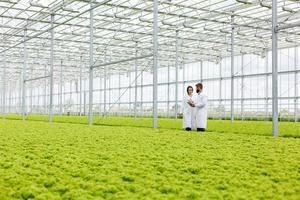 dois pesquisadores examinando a casa verde