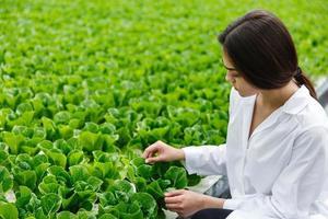 mulher com manto branco de laboratório examinando salada e repolho