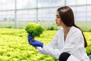 mulher examinando plantas