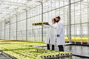 homem e mulher em vestes de laboratório trabalham com plantas em uma estufa