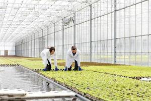 homem e mulher em vestes de laboratório trabalham com plantas