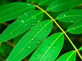 gotas de água na folha