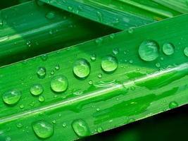 gotas de água em uma folha