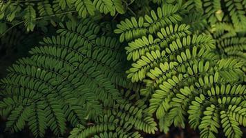 arbustos de samambaias tropicais foto