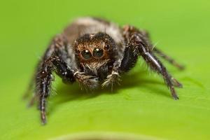 macro aranha em uma folha verde