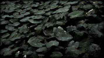 folhas com gotas de água