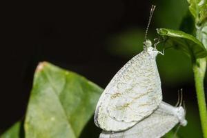 foto de close-up de mariposas acasalando