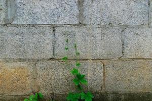 parede de pedra vintage foto