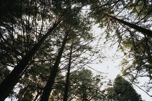 olhando para as árvores foto