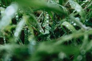 close-up de grama com gotas de chuva